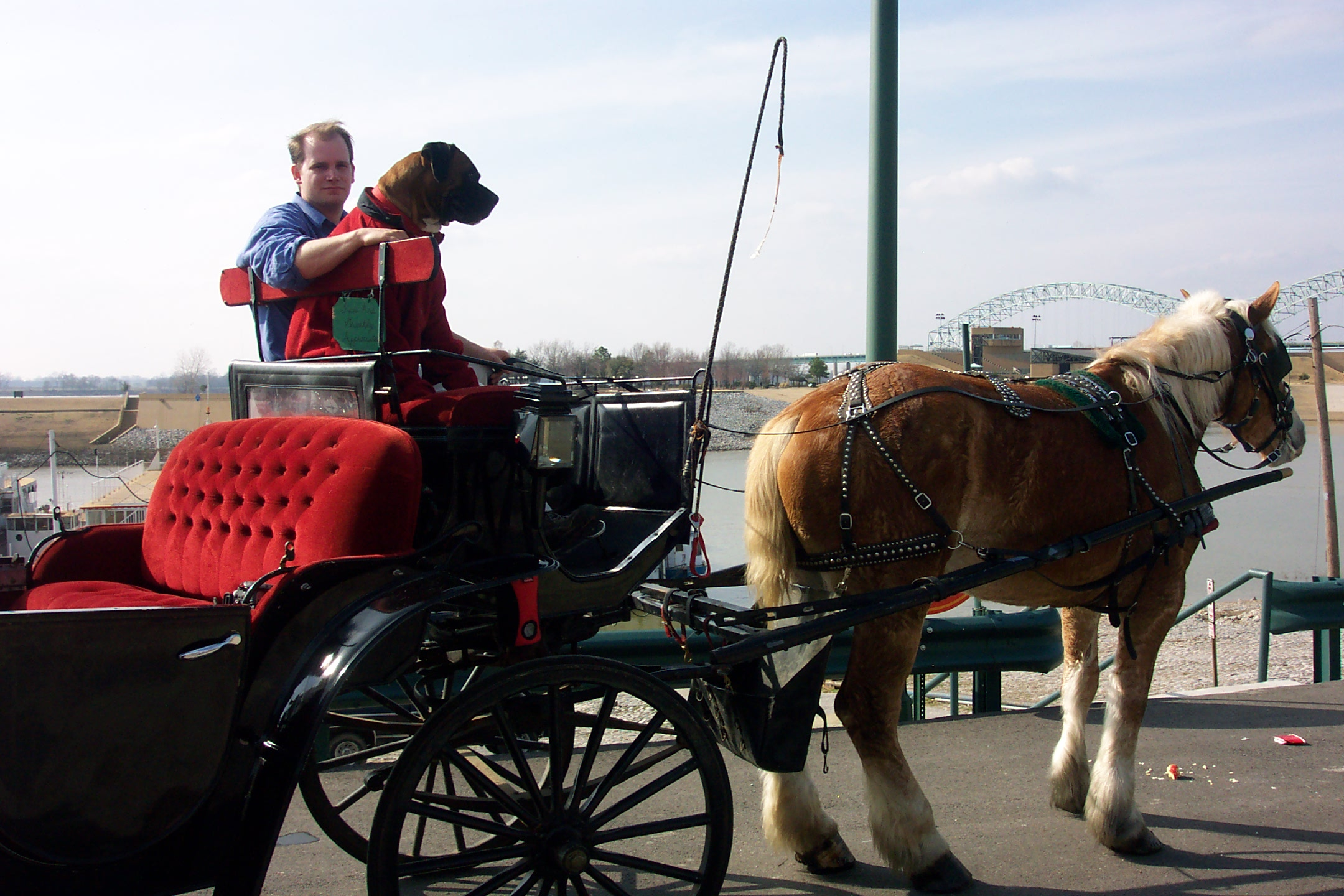 Best 5 Horse Carriage Rental in Memphis, TN with Reviews ...